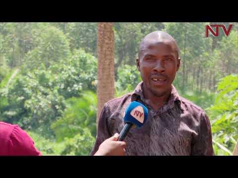 Abatuuze b'e Namugongo balojja abazigu ababafuukidde ekizibu