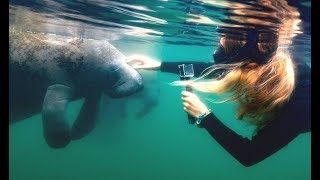 SWIMMING WITH MANATEES - Are Sea Cows dangerous?