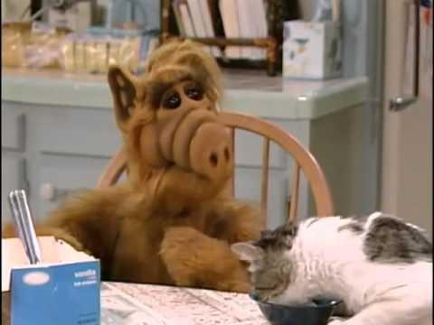 Katze Alf