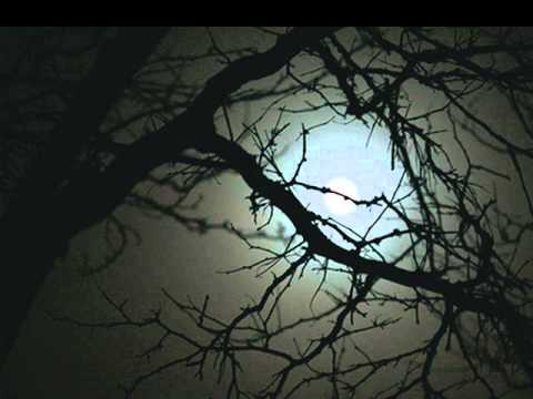 Shadowless- Midnight