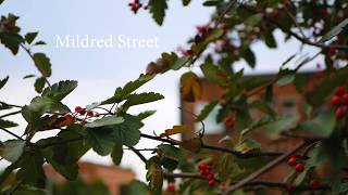 Mildred Street