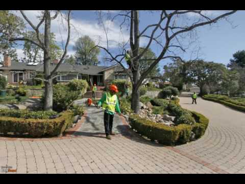 Tree service in San Diego County, California