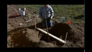 How To Properly Plant Walnut Trees - UCANR