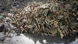 preview picture of video 'Contaminación Rio Yuna Cotui'