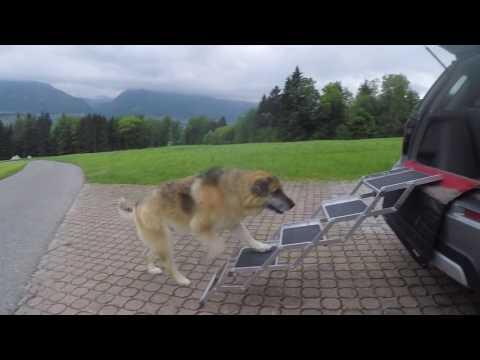 Hundetreppen - LUNA fällt aus dem Auto!