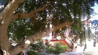 Frestyle Fpv in giardino # io resto a casa #