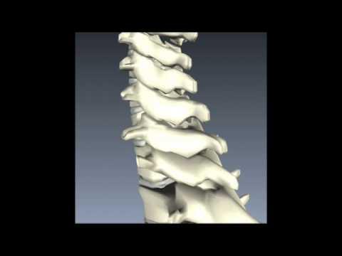 Mal di petto a sinistra e parte bassa della schiena