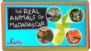 The Real Animals of Madagascar | Animal Science for Kids