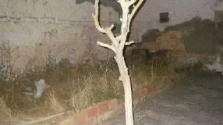 preview picture of video 'Verano 2008'