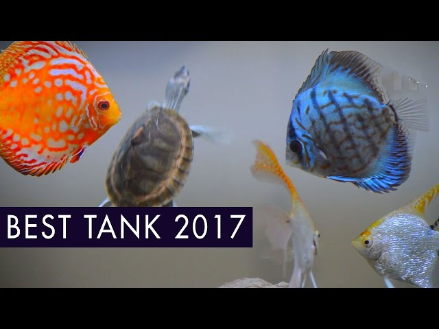 Best Fresh Water Aquarium 2017  •  Discus, AngelFish, Turtle, Neon Tetra