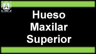 Hueso Maxilar Superior