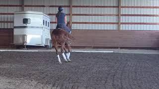 SOLD!! Sunnomma, Arabian dressage mare