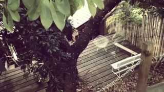 【神奈川】樹上のカフェでまったり演奏会♪