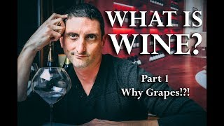 Whats is Wine? Why are Grapes So Unique?