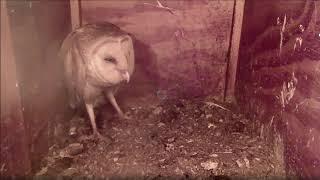 Mel visits and calls for Syd. Hedwig gets a huge rat. 7-31-19