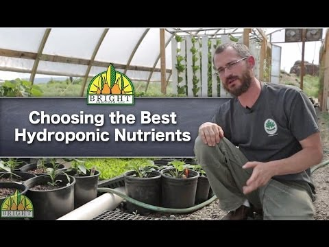 The Best Hydroponic Nutrients For Your System