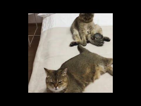 סרטון מצחיק: הצעצוע החדש של החתול המשועמם