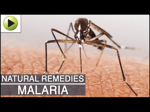 Video Malaria- Natural Ayurvedic Home Remedies