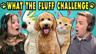 ADULTS REACT TO WHAT THE FLUFF CHALLENGE (Confusing your Pets Challenge!)