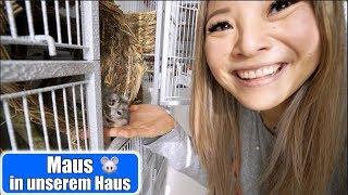 Maus in unserem Haus 😍 Claras Haustiere sind da! H&M Haul   Haushalt machen Mama VLOG   Mamiseelen