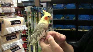 Top 5 Friendly Bird Species That Are Adoreable Pets