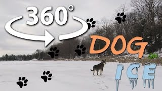 360 VR video - Dog on ice
