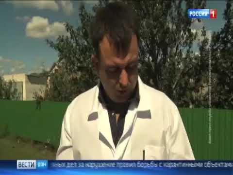 О выявлении очагов карантинного объекта - амброзии полыннолистной на территории Ростовской области
