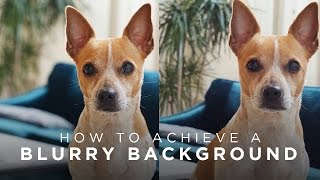How to Achieve Blurry Backgrounds in Photos/Videos   TECH TALK