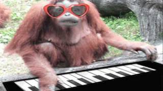 Clap your hands - Funny animals