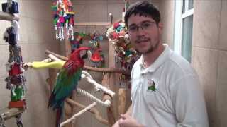 Adopted a Rescue Green-Winged Macaw