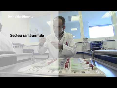 Les helminthes chez lenfant de 6 mois les symptômes