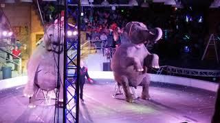 Garden Bros Repeatedly Hooking Elephants!