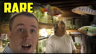 AMAZING FISH ROOM TOUR - So many RARE Fish!