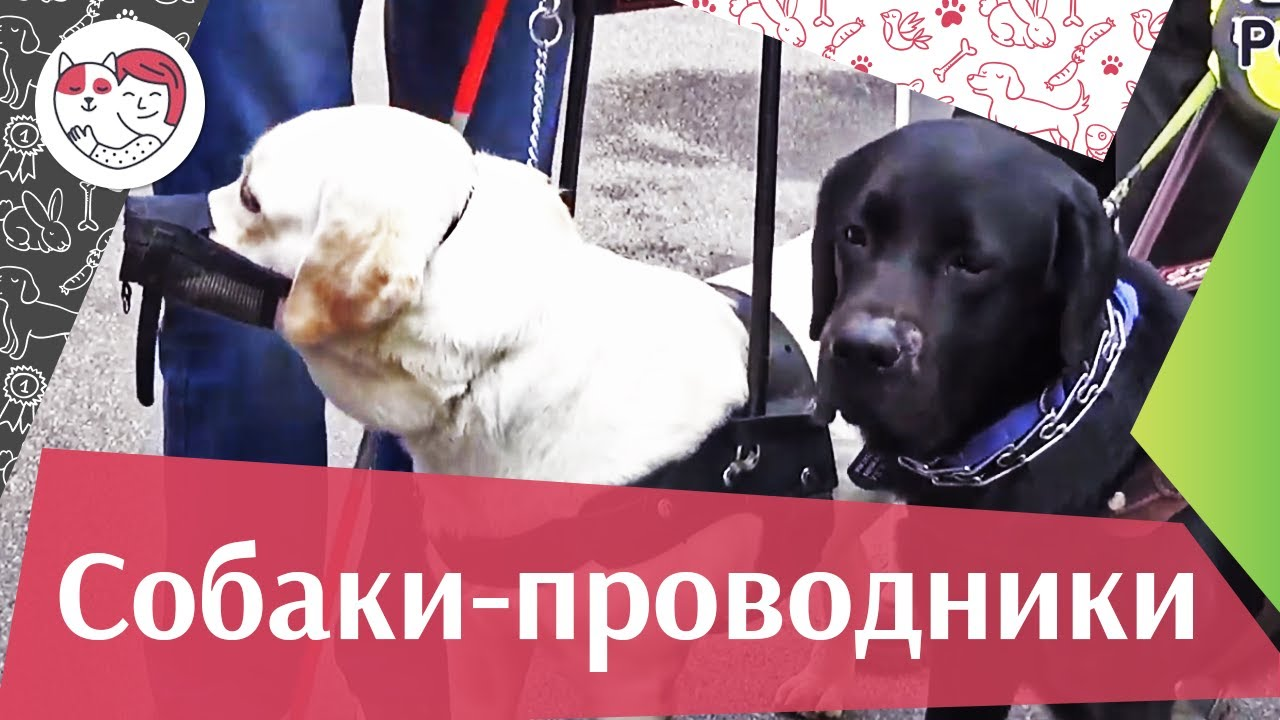 Акция «C собакой все пути открыты» на ilikepe