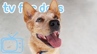 Dog TV! Virtual Reality Walk on the Beach Featuring Dogs! NEW 2019!