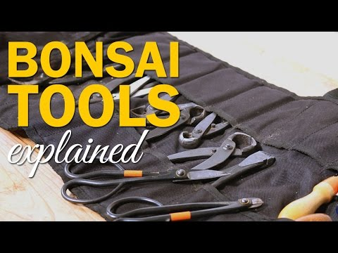 Bonsai Tools Explained : Types and Uses for working with your bonsai tree.