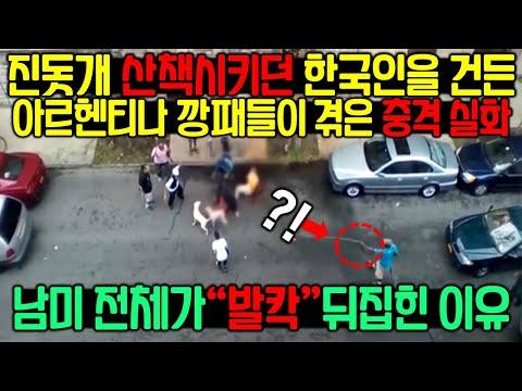 진돗개 산책시키던 한국인을 건든 아르헨티나 깡패들이 겪은 충격 실화