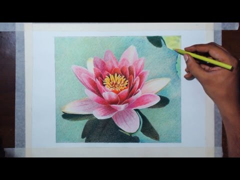 water lily flower drawing tutorial by fadil