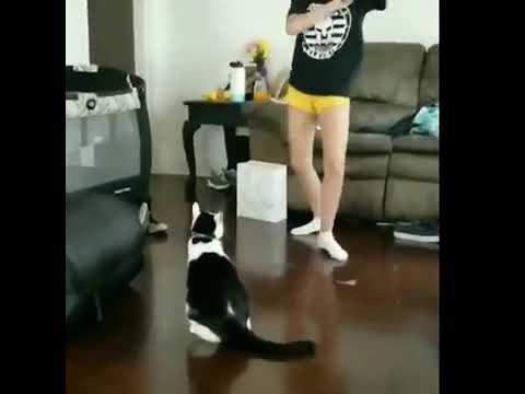 Достала кота, получай!
