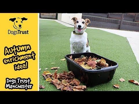 SUPER EASY Autumn Enrichment Idea For Dogs | Dogs Trust