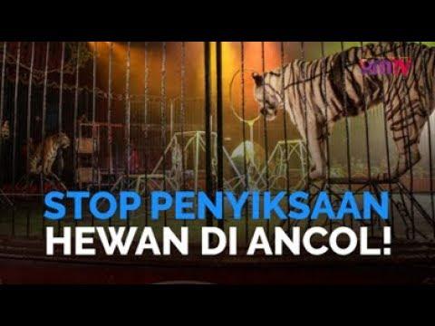 Stop Penyiksaan Hewan di Ancol!