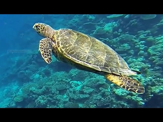Komandoo Maldives March 2014 Snorkeling using GoPro Hero 3