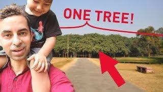 The World's W I D E S T Tree