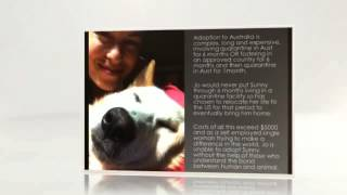 BRING MY DOG HOME! Help Sunny get home to Australia