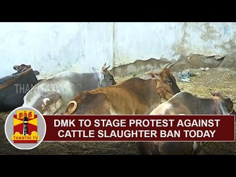 DMK to stage protest against Cattle Slaughter Ban Today in Chennai | Thanthi TV