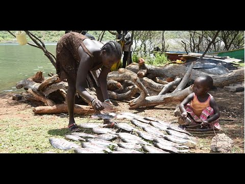 How fishing at Turkwel dam has restored peace in Pokot
