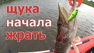 3 ЗАБРОСА - 3 ЩУКИ! Как ВЫТВИЧИТЬ щуку из КУВШИНОК. Пижма 2019.