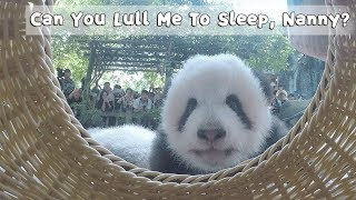 Can You Lull Me To Sleep, Nanny? | iPanda