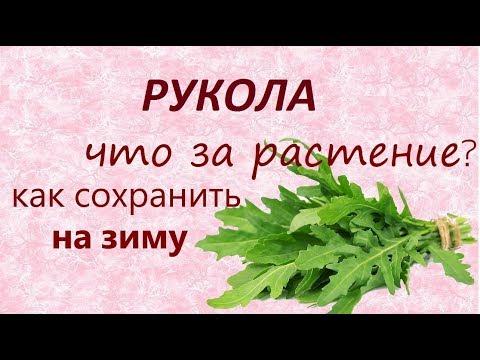 Руккола (рукола).//Салат с руколой//Заготовка на зиму