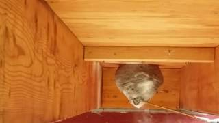 How to get rid of a hornets nest